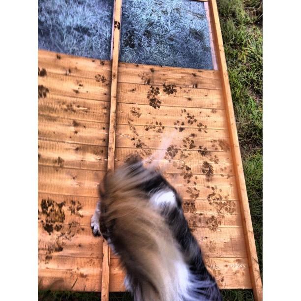 Merlin working on his latest pawformance (geddit?) art installation. #merlin #collie #dog #pet?)