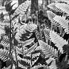 FernTastic Foliage