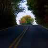 Tunnel Tree--Daniels Run