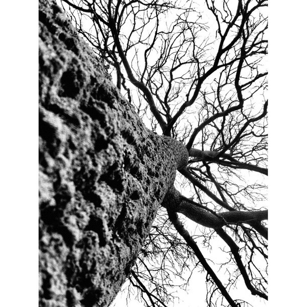 Disorientation #tree #bw #black&white
