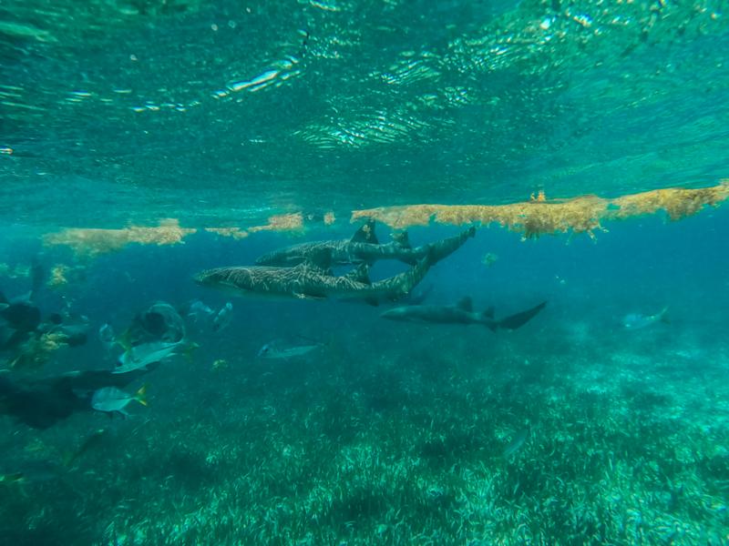 ~ Shark Encounter ~