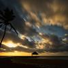 ~ Coconut Palm ~