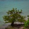 ~ West End Mangroves ~