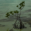~ Saltwater Tree ~