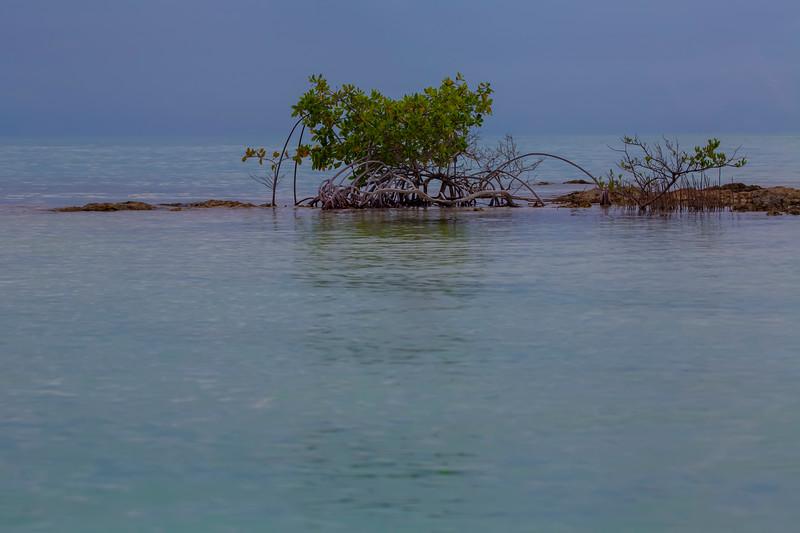 ~ Caribbean Roots ~