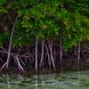 ~ Mangrove Alley ~