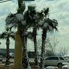 WELCA/Ammparo Border Immersion trip, February 1-5 2020, El Paso, Texas | <br /> <br /> <br /> Snow on a palm tree in El Paso.