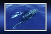 Whale-2876B