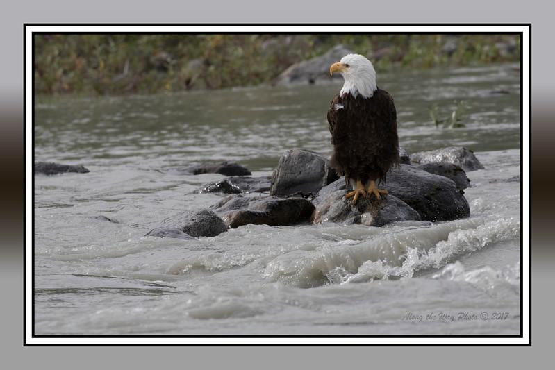 Yukon Eagle-5383