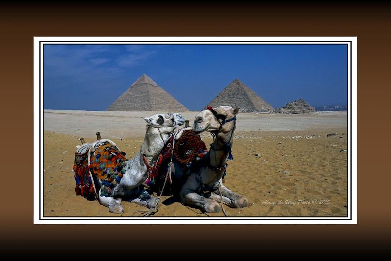 Egypt-8356B