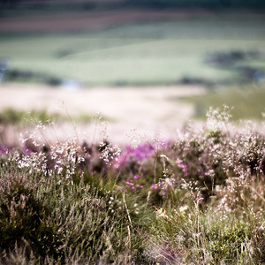Doddington Moor, view west, Northumberland UK