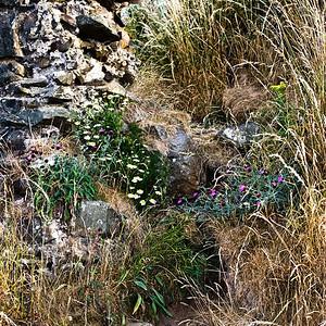Osborne's fort, the Heugh, Lindisfarne, Northumberland