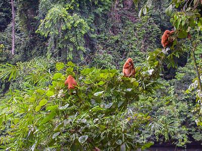 Borneo 2005