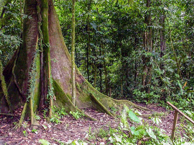 Danum Valley, Borneo, Malaysia 2005