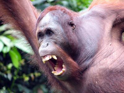 Borneo - 2007