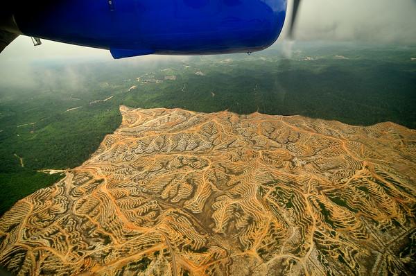Borneo_078