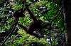 Borneo_079
