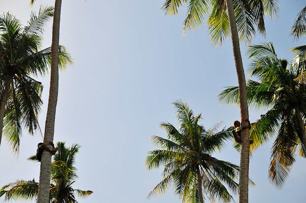 Borneo_009