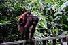 Borneo_080