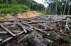 Borneo_077
