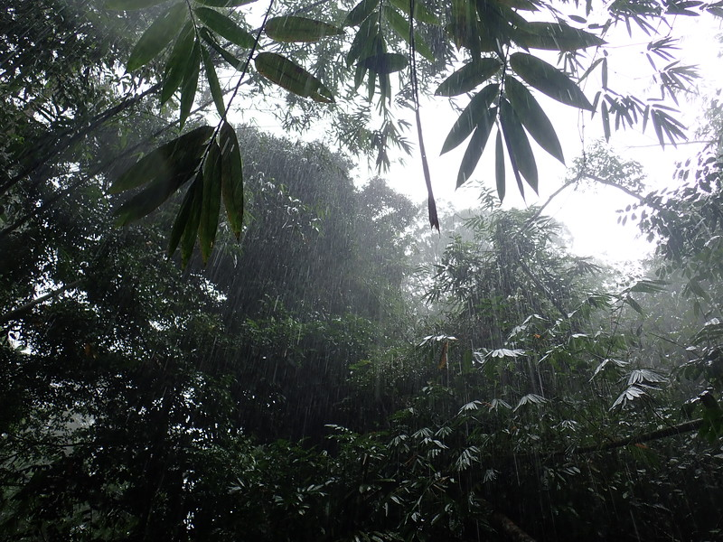 Heavy Rain in the jungle