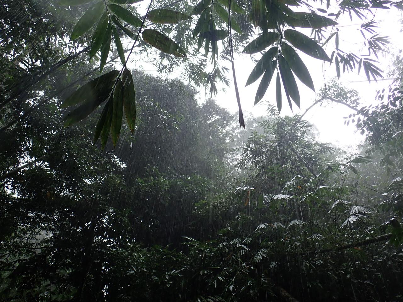 Heavy Rain in the jungle