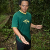 lower Kinabatangan River, eastern Sabah,