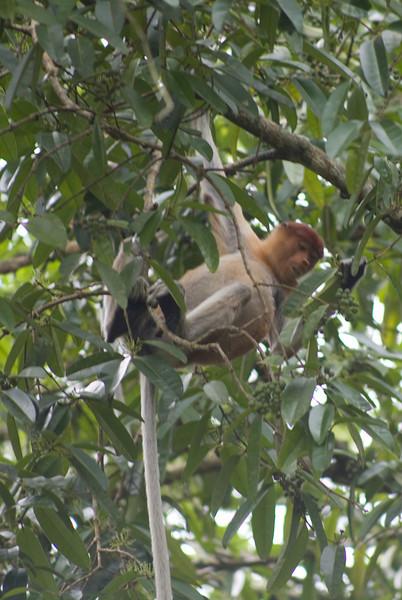Bako National Park Borneo