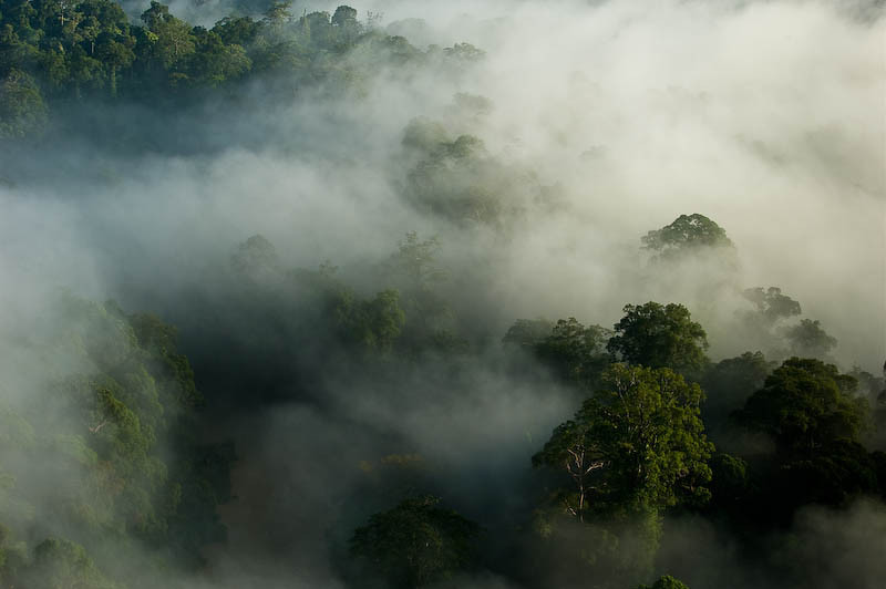 Danum Valley - Malaysian Borneo