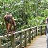 orangutan checking me out