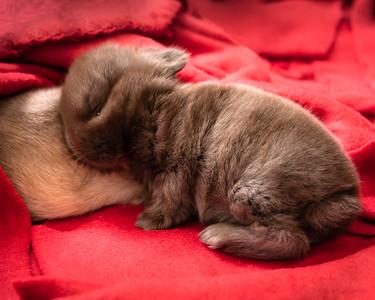 Baby Bunny Nap Time  (photo 60758)