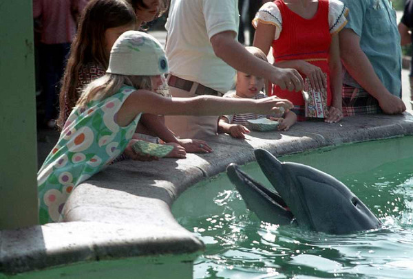 Sherrie feeding dolphin at Sea World in California.