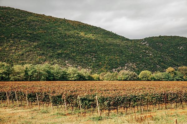 Vineyard close to Mostar in Bosnia.