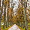 Horse path, Vrelo Bosne