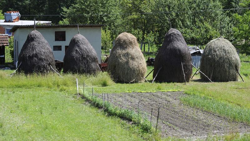 Haystacks, near Tinja, between Mramor and Srebrenik, Bosnia-Hercegovina, Tues 10 June 2014