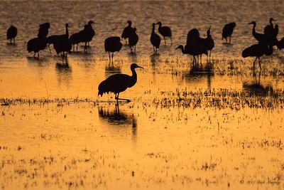 Days End Crane Pond, Bosque del Apache NM
