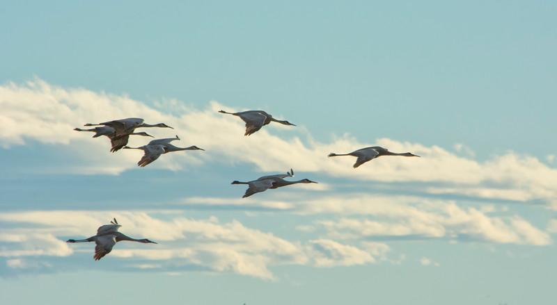 SevenCranes landing_BSQ_4579