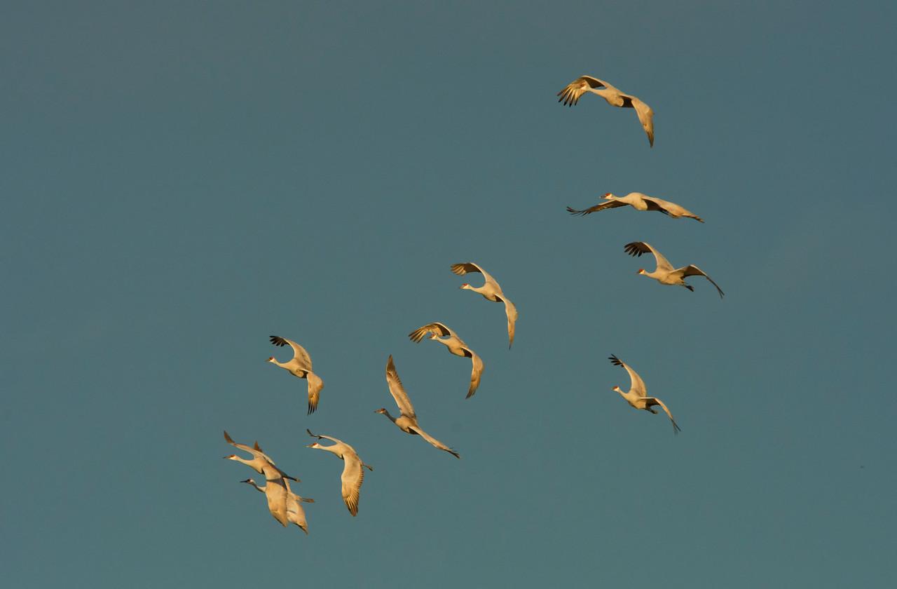 Eleven Cranes Landing_BSQ_4691