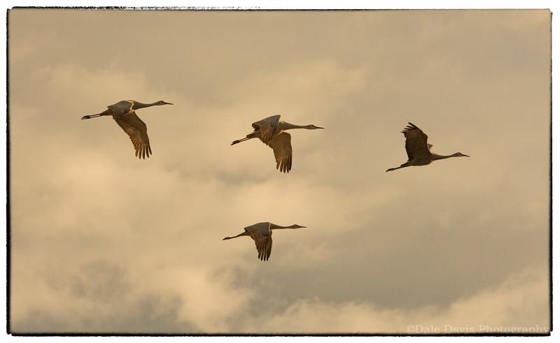 Four Cranes-BSQ_4747