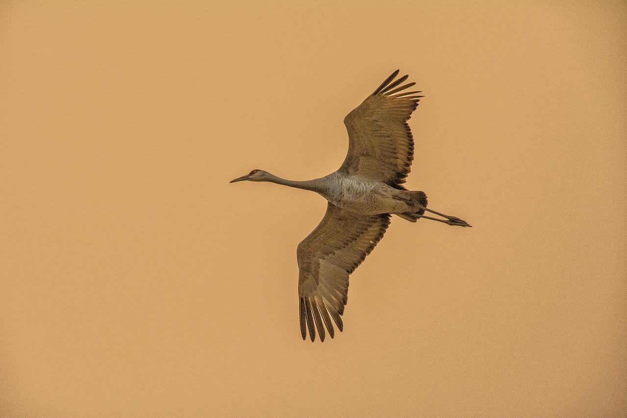 Crane overhead_BSQ_4964