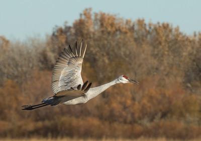 Crane Landing II