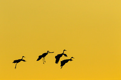 Four Cranes Flying