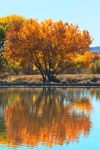 Autumn at Bosque