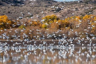 White Birds Landing