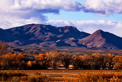Bosque_del_Apache_Landscape_Mtns_Background_D75_1720