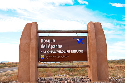 Bosque del Apache National Wildlife Refuge   11-9-17