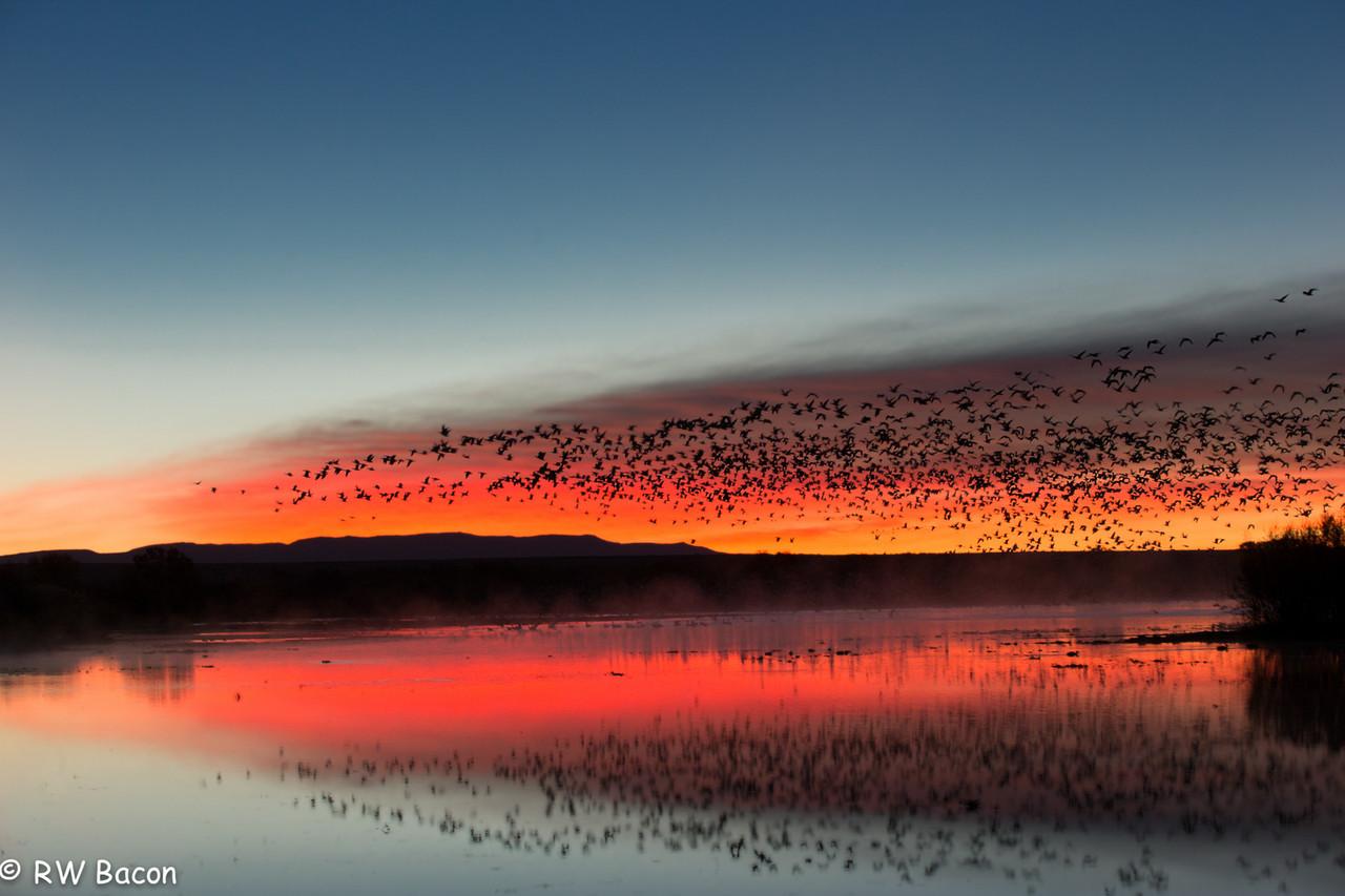 Bosque Sunrise Flyout