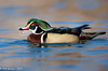 Wood Duck Water Drop