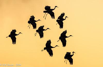 Sandhill Ballet