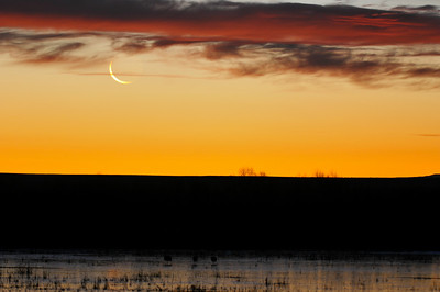 Bosque del Apache sunrise (and moonrise)